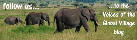Photo promotion for the Voices of the Global Village blog, image of 3 elephants in a family group walking left to right