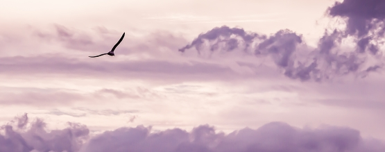 wide angle image of a bird flying high up in a pink and grey cloudy sky